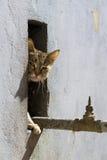 принятая улица фото кота бездомная Стоковая Фотография RF