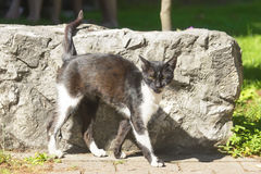 принятая улица фото кота бездомная Стоковое Изображение RF