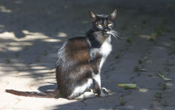 принятая улица фото кота бездомная стоковые изображения rf