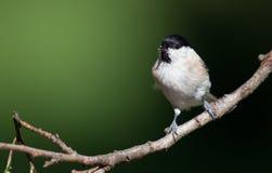 3 5 36 400 принятого малого фото рамки полных m mm преобразования ветви птицы оптических было Стоковая Фотография