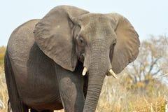 принятое лето 2007 национального парка слона chobe Ботсваны Стоковые Фото