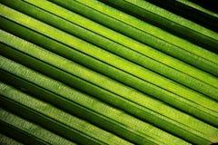 принятое солнечное ладони листьев дня Стоковые Фото