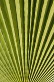 принятое солнечное ладони листьев дня Стоковое Фото