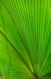 принятое солнечное ладони листьев дня Стоковая Фотография RF
