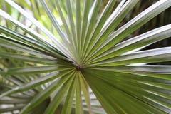 принятое солнечное ладони листьев дня Стоковое Изображение