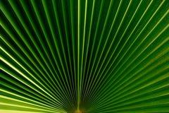 принятое солнечное ладони листьев дня Стоковое Изображение RF