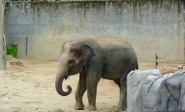 принятое фото 2009 слона младенца Стоковые Фотографии RF