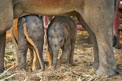 принятое фото 2009 слона младенца стоковое фото