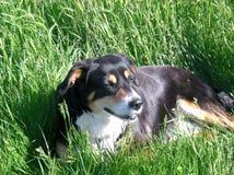принятое фото уровня земли травы собаки стоковое изображение rf