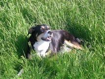 принятое фото уровня земли травы собаки стоковое изображение