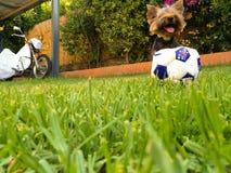принятое фото уровня земли травы собаки Стоковые Фото