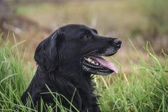 принятое фото уровня земли травы собаки Стоковое Фото