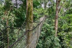 Приостанавливанные верхняя часть дерева или прогулка сени в дождевом лесе Нигерии на ранчо сверла горы Afi Стоковое фото RF