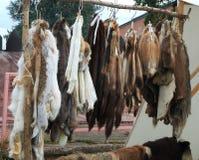 Приостанавливанные кожи животных мех-подшипника на подносе торговца Стоковое Изображение RF