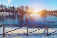 Припаркуйте в предместье Санкт-Петербурга на день зимы солнечный стоковые изображения