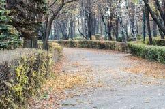 Припаркуйте переулок Стоковая Фотография RF