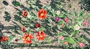 Припаркуйте пурпур цвета лета цветков весны зеленый, взгляд сверху Стоковые Изображения RF