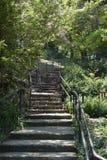 припаркуйте шаги Стоковая Фотография RF