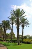 Припаркуйте Ramat Hanadiv, мемориальные сады барона Edmond de Rothschild Стоковое Изображение