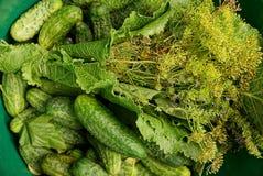 Приправы овощей, салата и овоща в зеленом тазе Стоковые Фотографии RF