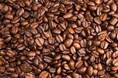 приправленный кофе фасолей Стоковое Изображение RF