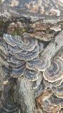 Природа Айовы стоковое изображение rf