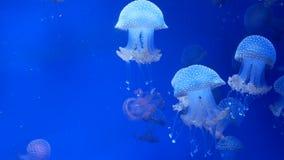 Природа аквариума медуз акции видеоматериалы