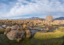 Природа Боливии стоковая фотография rf
