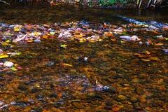 Природа весны потока Стоковые Фото