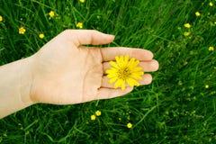природа влюбленности к Стоковое Фото