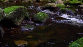 Природа воды bach реки водопада акции видеоматериалы