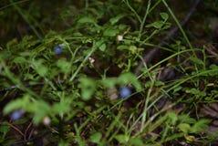 Природа в области Иркутска стоковая фотография rf