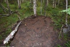 Природа в области Иркутска стоковые изображения