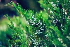Природа в парке Кэрола Стоковая Фотография