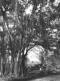 Природа в Таиланде Стоковое фото RF