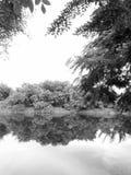 Природа в Таиланде Стоковые Фотографии RF