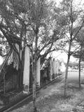 Природа в Таиланде Стоковые Изображения RF