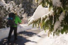 Природа в фокусе Панорама горы Словакии Парк Tatransky narodny стоковые фотографии rf