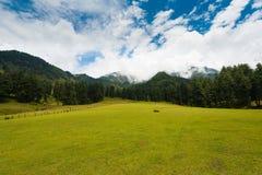 Природа горы холма Pahalgam долины Кашмира Aru Стоковое фото RF