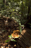природа грибков Стоковое Изображение RF