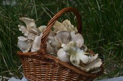 Природа, грибы, глушь, зеленая трава, еда, eaiting, Стоковое Изображение