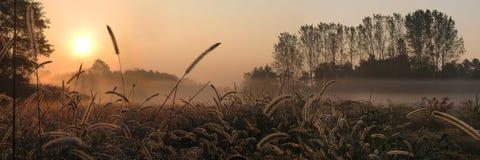 природа доброго утра Стоковое Изображение RF