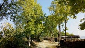 Природа, дорога, сельская местность, royaloak, зеленый цвет, весна, красивая стоковые изображения rf