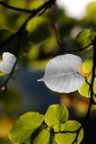 природа драгоценностей Стоковые Изображения