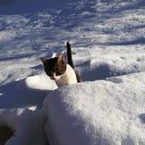 Природа, животное pets mountines, бревенчатая хижина Стоковые Фотографии RF