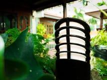 Природа зеленого растения дома сада лампы деревянная Стоковое фото RF