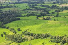 Природа зеленого цвета сельской местности поля риса стоковое фото