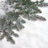 Природа зимы, ель в заморозке снега Стоковое Изображение RF