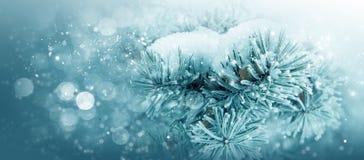 Природа зимы, рождественская елка в заморозке снега Стоковое Фото