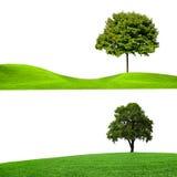 природа знамен Стоковое Фото